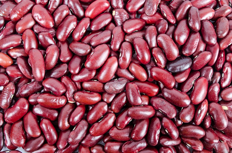 beans-316592-960-720.jpg