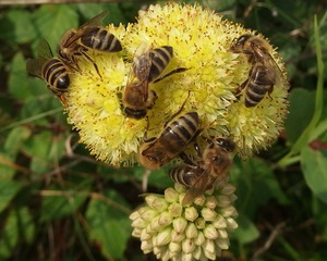 včely_ilu.jpg