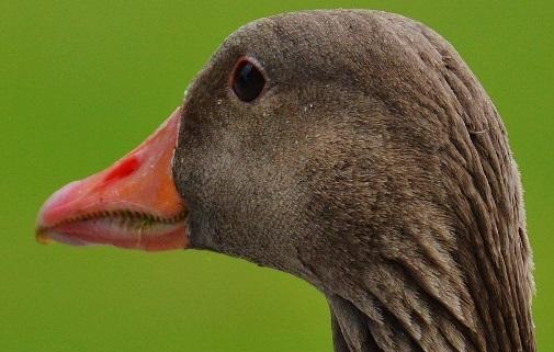 ptaci-chripka2.jpg