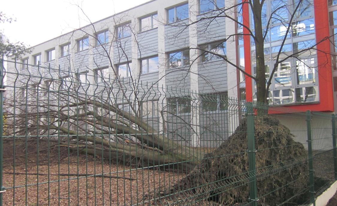 vyvraceny-strom.png