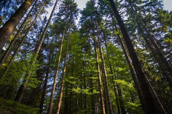 forest-1706191_640.jpg