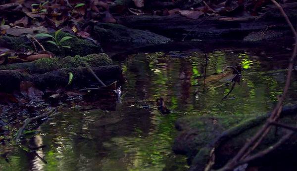 170716942-arroyuelo-bosque-templado-humedo-suelo-rio-zambeze.jpg