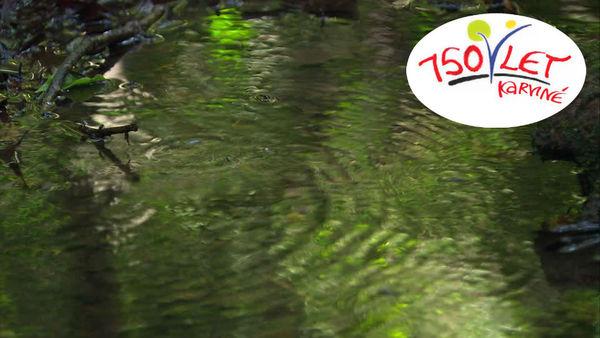 647540435-arroyuelo-bosque-templado-humedo-suelo-rio-zambeze.jpg